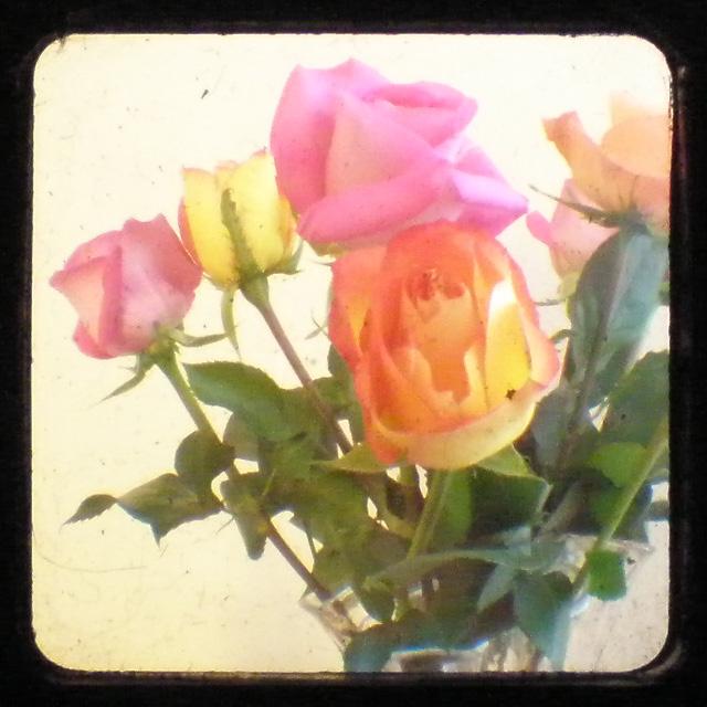 Rosesttv1