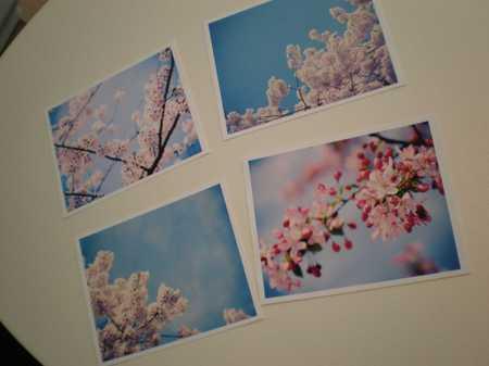 Cherryprints